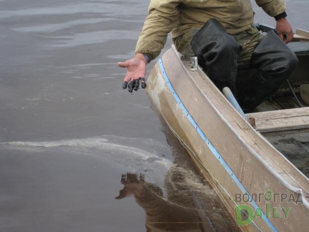 Разлив нефти вВолгоградской области нанёс кошмарный вред экологии