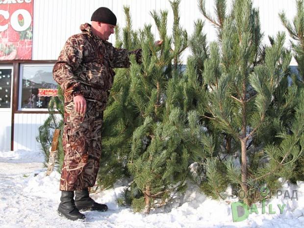 Наелочных базарах Волгоградской области будет реализовано 15 тыс. лесных красавиц