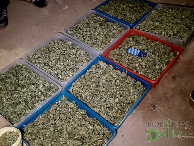 ВВолгограде задержана банда наркодилеров с11кг марихуаны