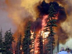 ВСерафимовичском районе Волгоградской области горит лес