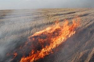 Впойме только запервую неделю апреля произошло 17ландшафтных пожаров