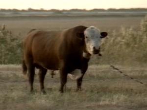 Врегионе втекущем году будут построены 11семейных молочных ферм.