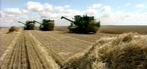Правительство России обещает выделить льготные кредиты пострадавшим отзасухи регионам
