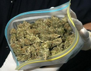Полиция нашла у жителя Камышина марихуану