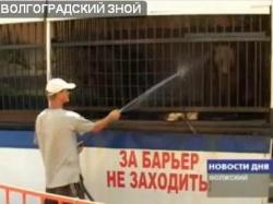 Жара помешала передвижному зоопарку сменить Волжский на Волгоград